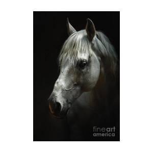 767cacac1ac White Horse Head Art Portrait Art Print by Dimitar Hristov