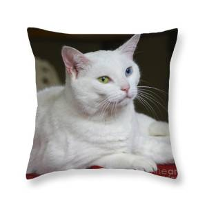 Illustration Textile,Ladies Full Zip Fleece with Pocket Domestic Cat S Pretty Pillows and Cute cat on a White Background.