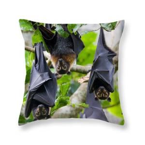flying fox pillow