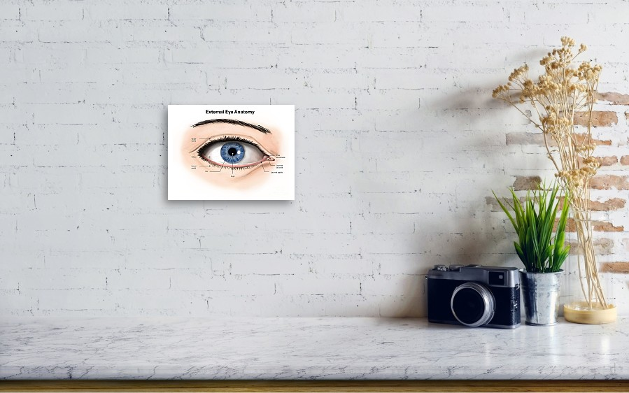External Anatomy Of The Human Eye Acrylic Print by Alan Gesek