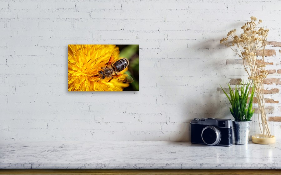 Bee On A Yellow Dandelion Flower Collecting Pollen And Gathering Nectar To  Produce Honey In The Hive Acrylic Print