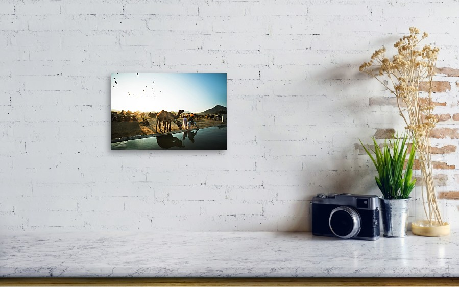 f2c66fd724 Working Animal Acrylic Print featuring the photograph Camel Drinking Water  From A Trough by Exotica. Wall View 001