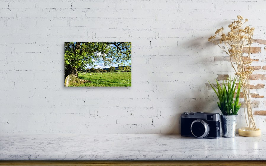 The Beautiful Cheshire Countryside - Large Oak Tree Frames A Field ...