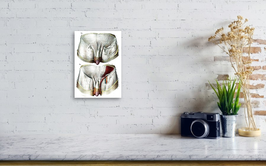 Male Groin Anatomy Canvas Print / Canvas Art by Collection Abecasis