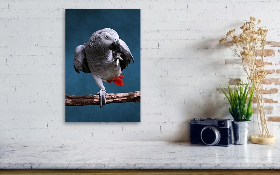 Studio Dalio - African Gray Parrot Canvas Print