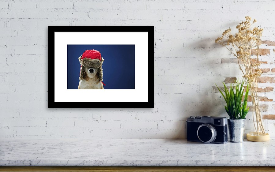 Horizontal Framed Print featuring the photograph Winter Hat Dog by Chris  Stein. Wall View 001 ae32eca5455d
