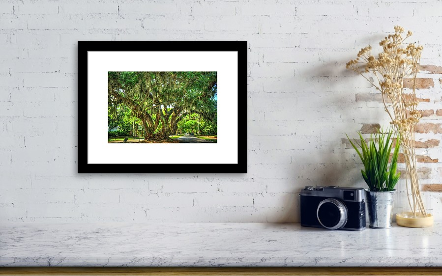 Lovers Oak Live Oak Tree Brunswick Georgia Art Framed Print by Reid ...