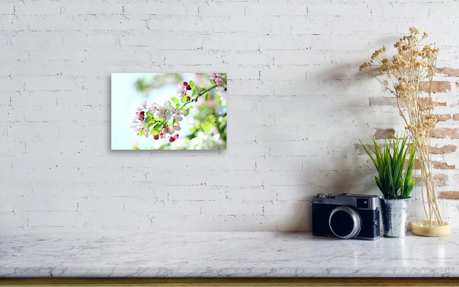Japanese Crabapple Blossom Metal Print