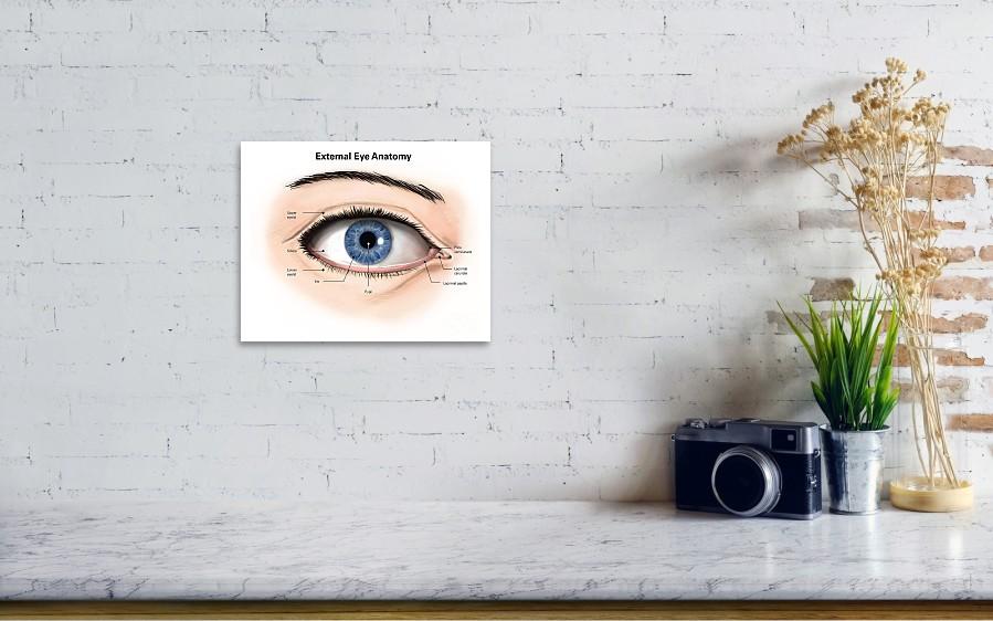 External Anatomy Of The Human Eye Poster by Alan Gesek