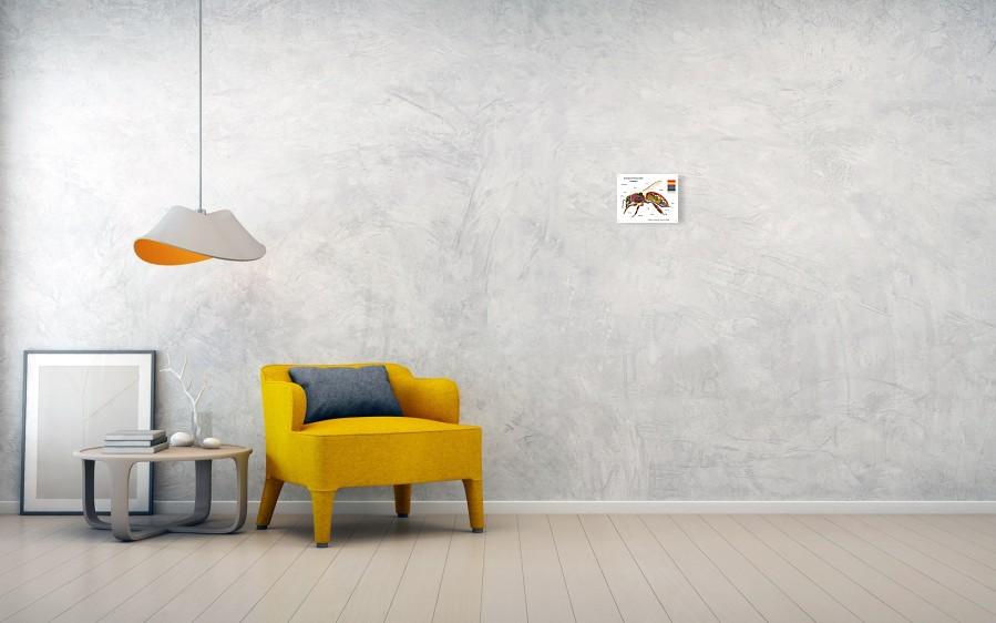 European Honey Bee Anatomy Poster By Alex Surcica