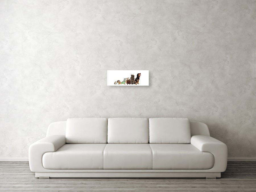Group Of Pets Looking Up And Side Banner Acrylic Print