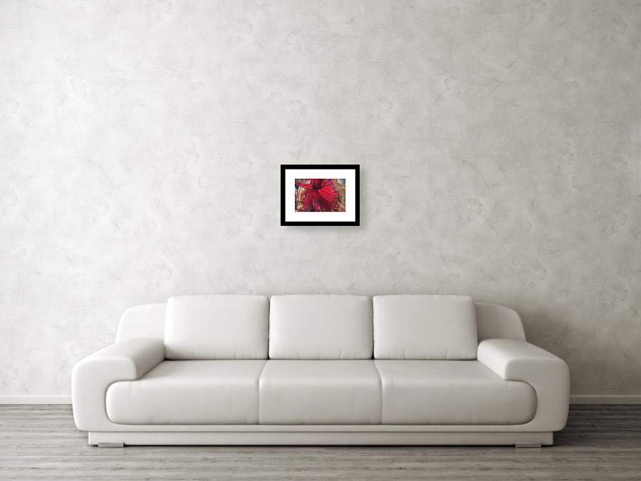 Red Feather Star Fish Framed Print by Puzzles Shum