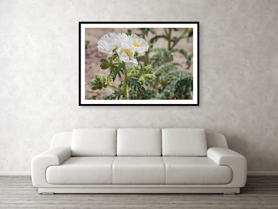 Desert Poppies framed print by Tatiana Travelways. Bring your print to life with hundreds of different frame and mat combinations.