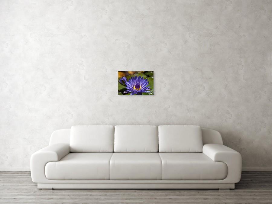 La Fleur De Lotus Star Of Zanzibar Tropical Water Lily Poster By