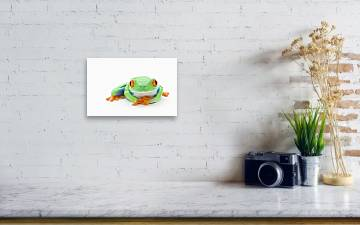 Red Eyed Tree Frog Agalychnis Callidryas Canvas Print Canvas Art By Design Pics Corey Hochachka