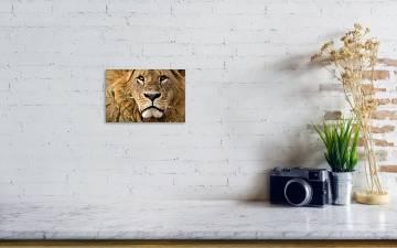 Close Up Portrait Of A Majestic Lion S Solemn Face Art Print